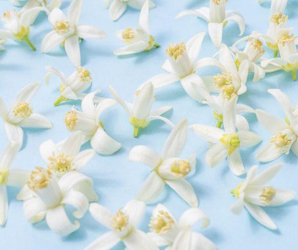 Φυσική πηγή ομορφιάς – 4 συστατικά που προστατεύουν την επιδερμίδα !