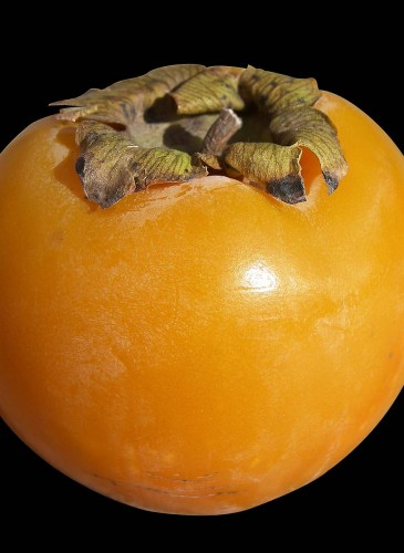 kaki-persimmon